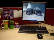 Pig Collections-Office Workstation