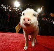 Famous Pigs-Albert