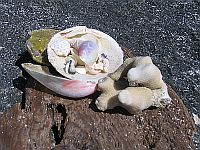 Bermuda Beaches - Shells